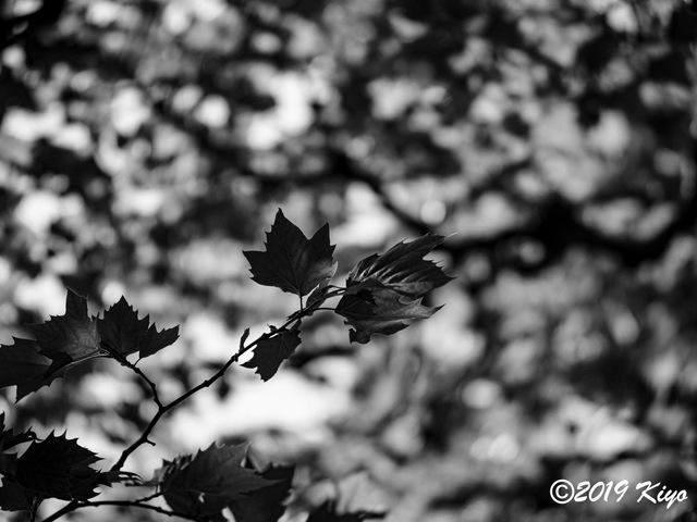 E5117959_CameraRAW_2048_signed.jpg